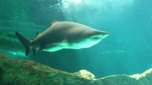 cápák, víz alatti