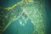 Shark swimming under sea