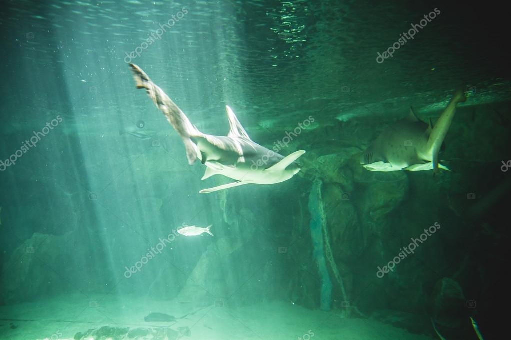 Shark swimming under sea