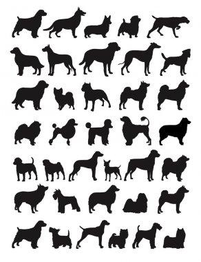 """Картина, постер, плакат, фотообои """"популярные породы собак """", артикул 15850987"""