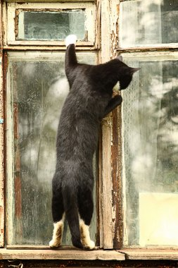 Curious cat in the window