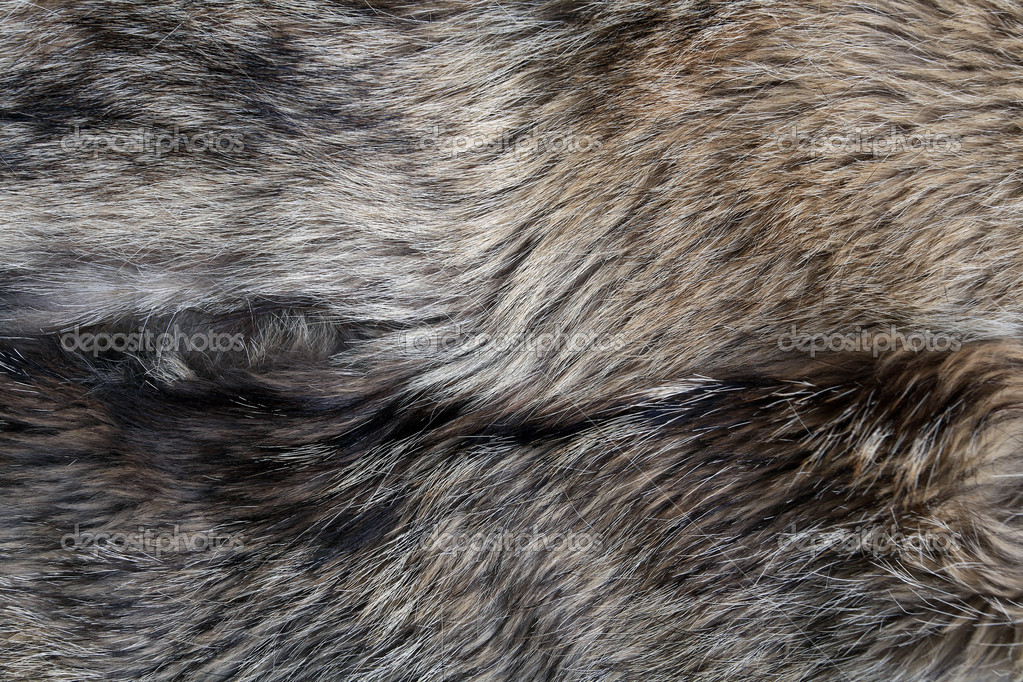 wolf fur texture of the gray wolf skin — Stock Photo ...