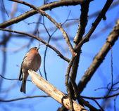A fióktelep a kis madár