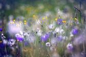Fényképek vadvirágok, tavaszi, nyári, naplemente mező