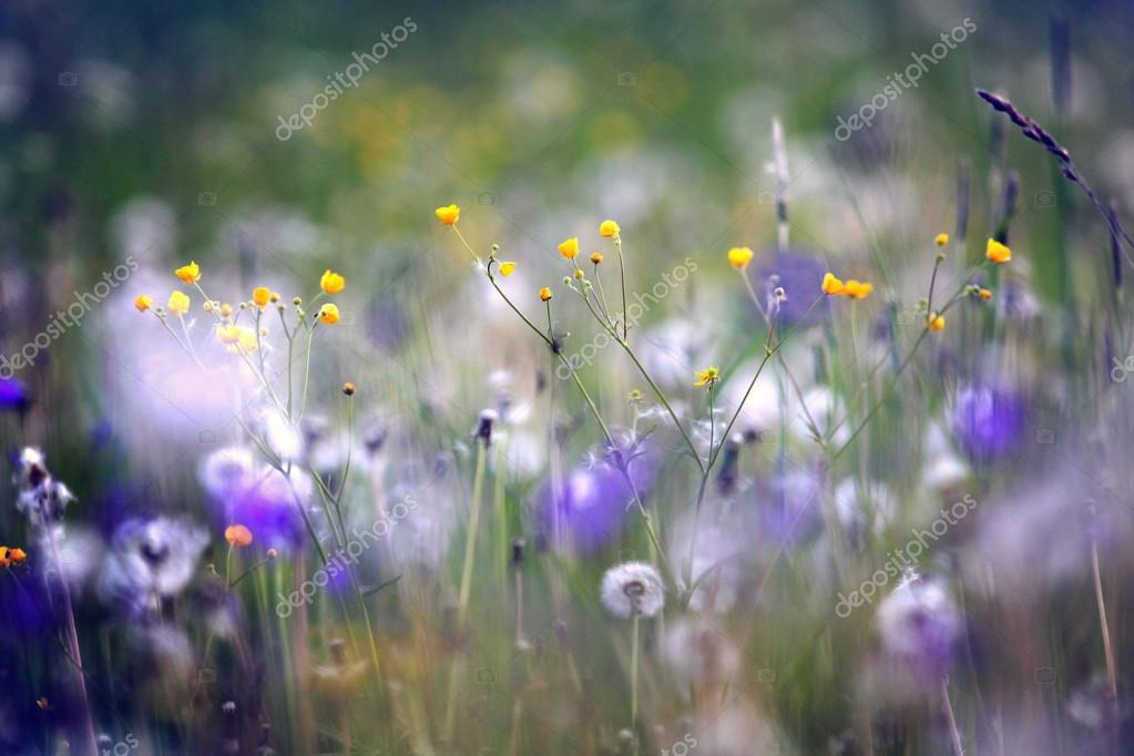 wildflowers, spring, summer, sunset field