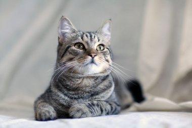 Funny gray cat on a sofa