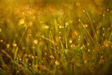 Grass of summer sunset