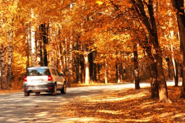 Car in the autumn forest