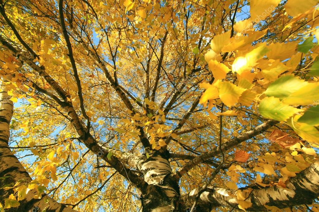 Autumn branch with yellow leaves