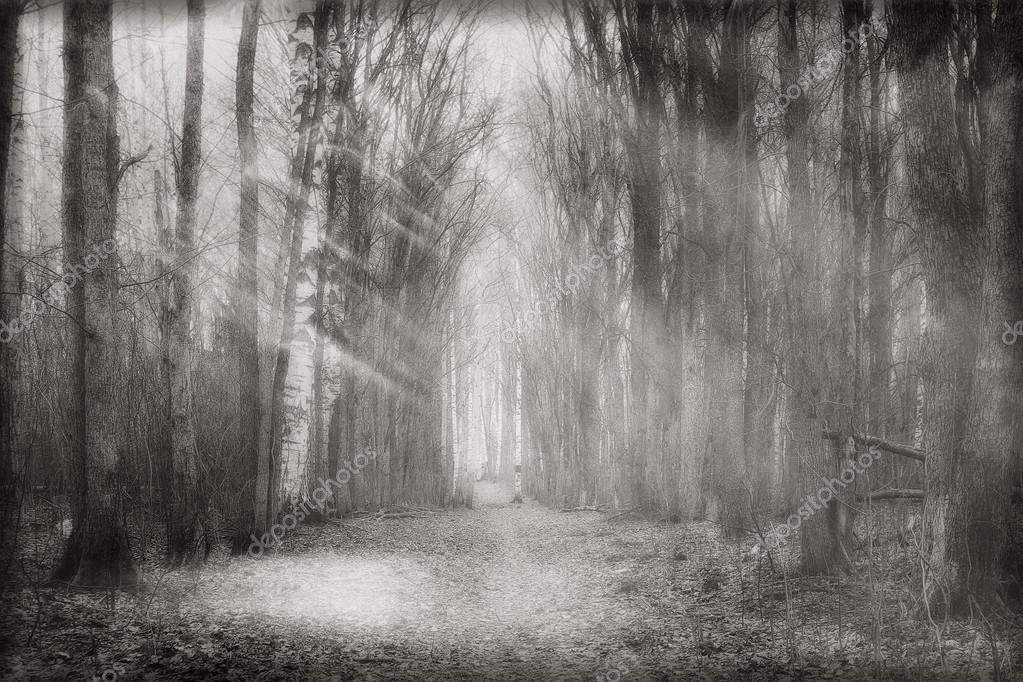 Mystical forest fog