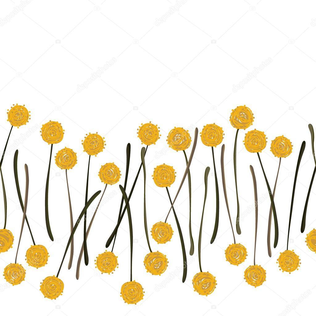 Messy Billy Balls Craspedia Beautiful Yellow Flowers On White