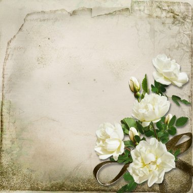 The branch of roses on a vintage background