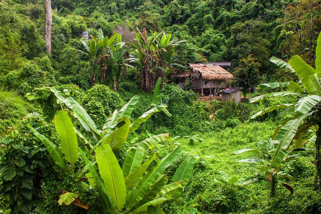 House in a jungle