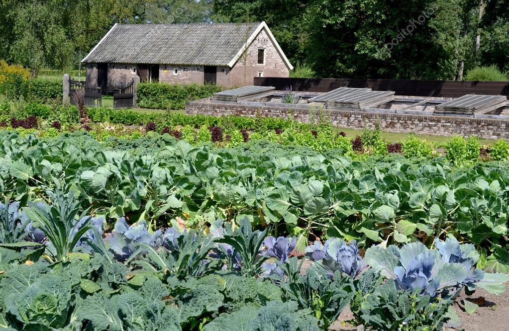 Vegetable garden in August.