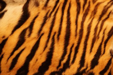 Textured tiger fur