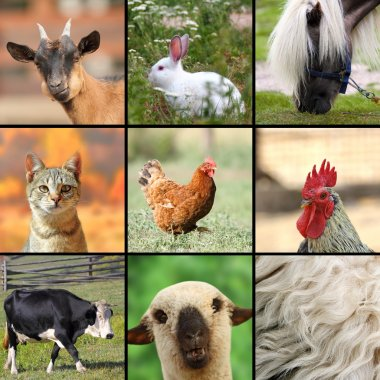 large collage with farm animals