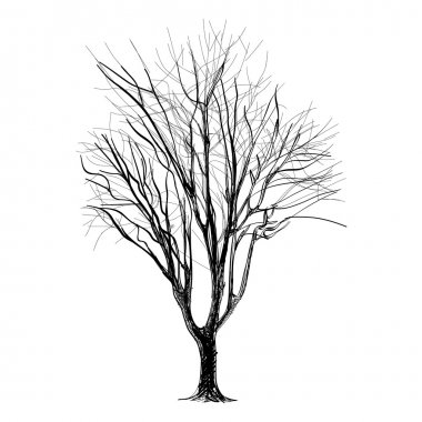large bare tree without leaves - hand drawn