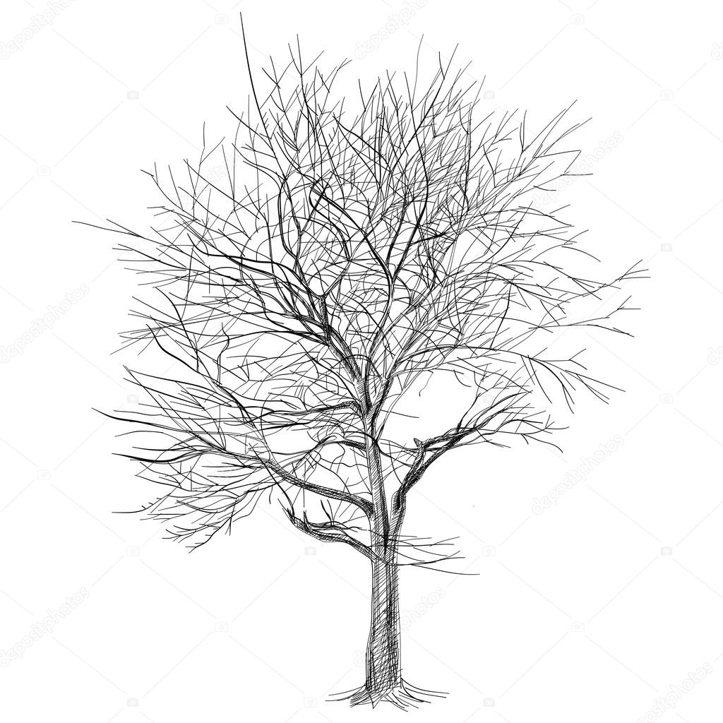 large bare tree without leaves (Sakura tree) - hand drawn