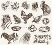 Kuřecí chov