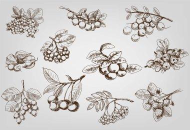 Set of berry