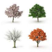 Fotografia albero a quattro stagioni