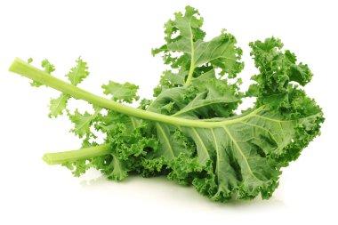 Freshly harvested kale cabbage