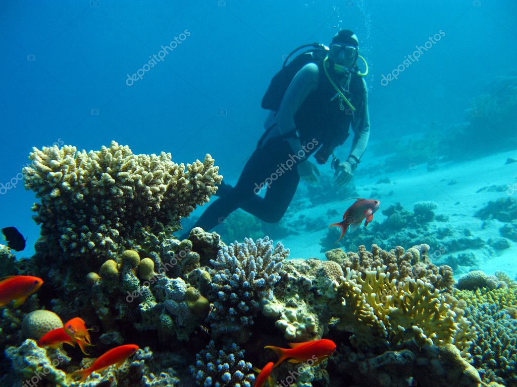 Scuba diver above coral reef in tropical sea