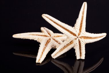 Some of sea stars isolated on black background