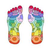 Fotografie Reflexology foot massage points