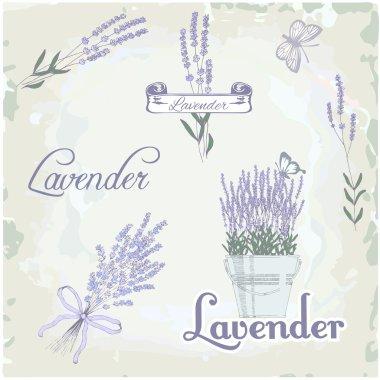 Lavender herb flower, vintage background