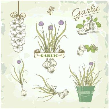 Garlic vegetables, herb, plant, cusine vintage background, packaging product