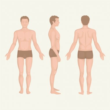 man body anatomy, front, back and side standing vactor human pose