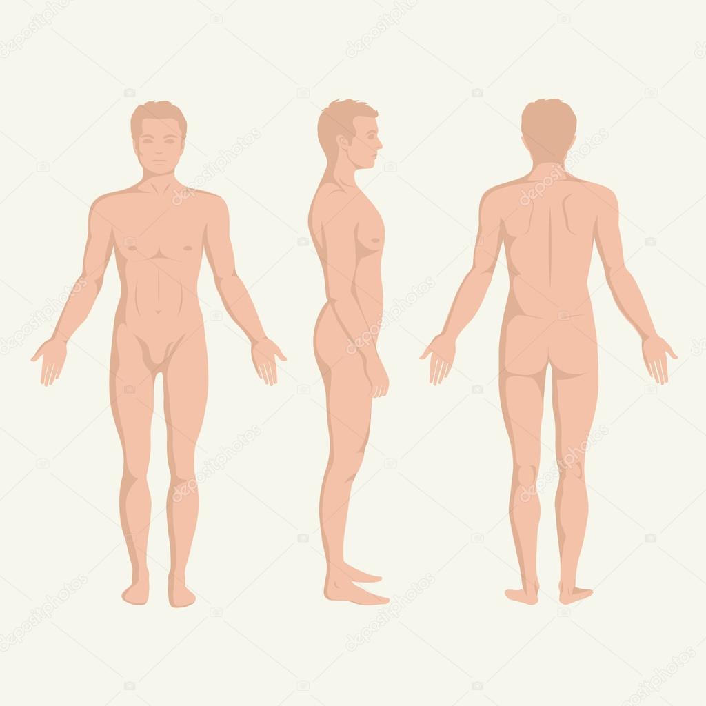 Mann Körper Anatomie, vorne, hinten und Seite stehend Vactor ...