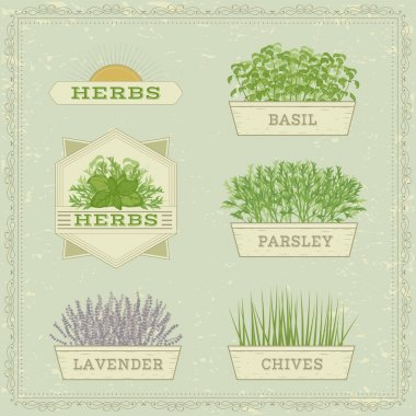 Isolated herbs,lavender, chives, parsley,  and basil,