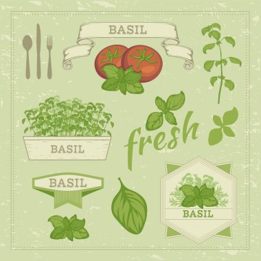 vector isolated herbs illustration, basil leaves and tomato set , food background