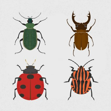 Green beetle, Stag beetle - the largest beetle, Lady Bug, shield bug insects set