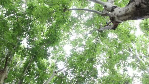 shot s ptáky létající mezi větvemi stromů
