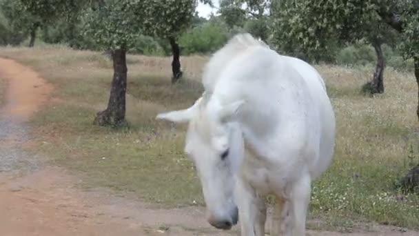 ló bólogat