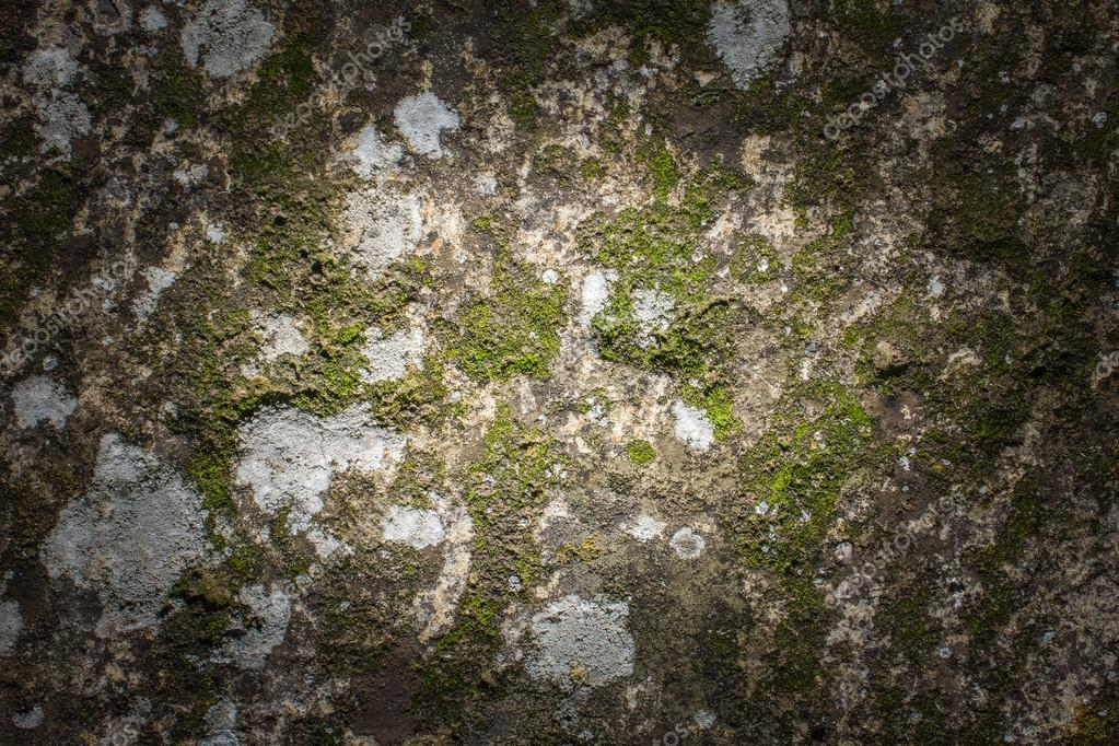 Stone and moss texture