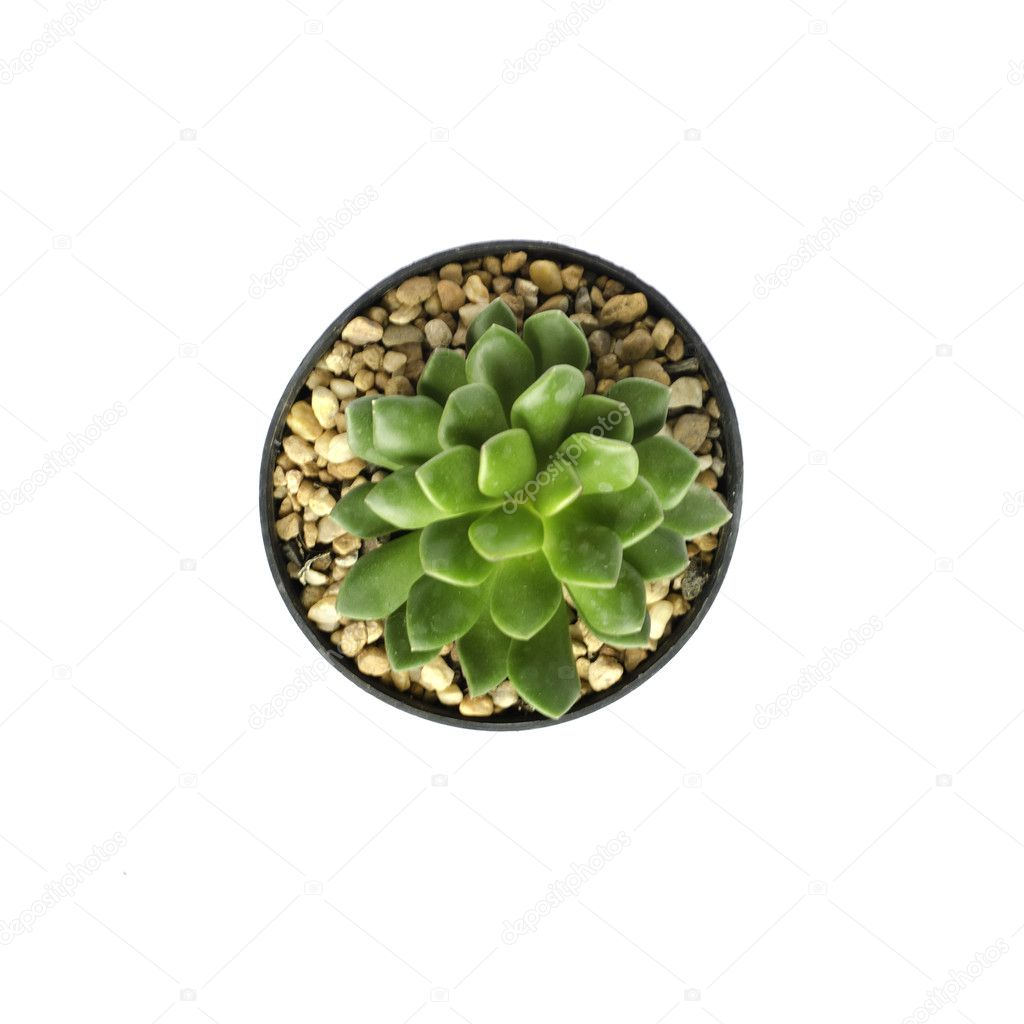Top view of Potted cactus