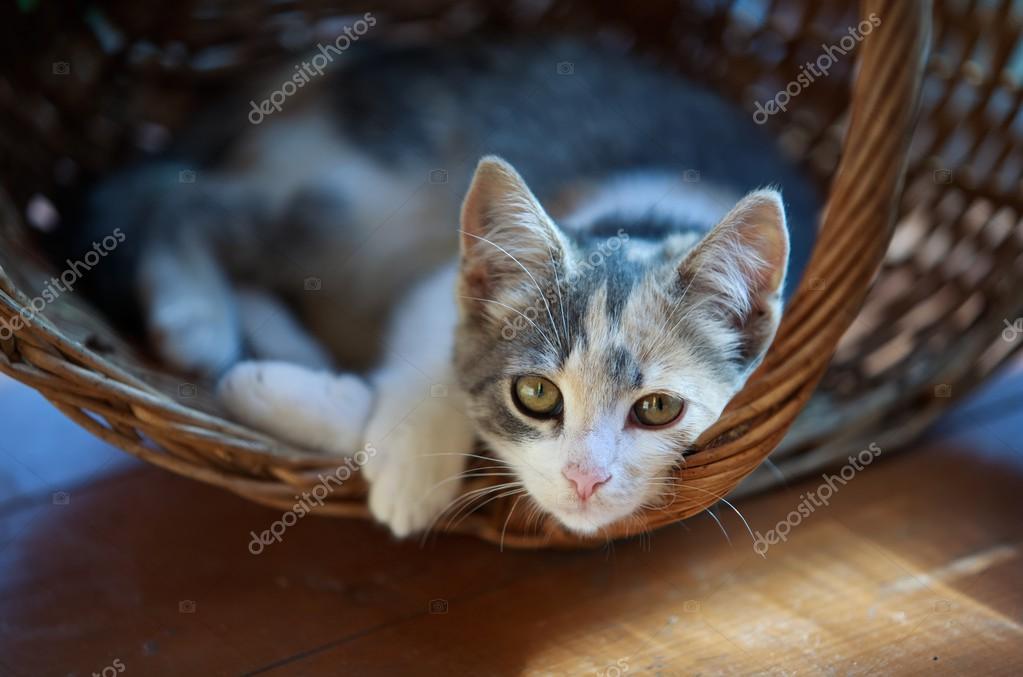 Cat pretty