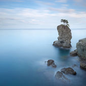 Portofino parku. borovice strom rock. dlouhé expozice. Ligurie, Itálie
