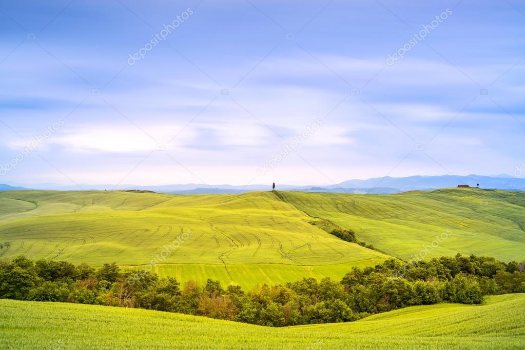 Tuscany, cypress tree and green fields. San Quirico Orcia, Italy.