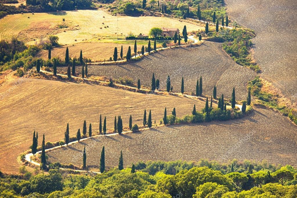 Cypress tree scenic road in Pienza near Siena, Tuscany, Italy.