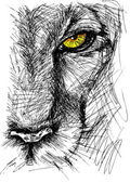 Fotografie Hand drawn Sketch of a lion looking intently at the camera
