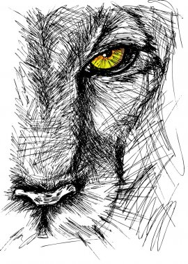 Hand drawn Sketch of a lion looking intently at the camera. Vector illustration stock vector