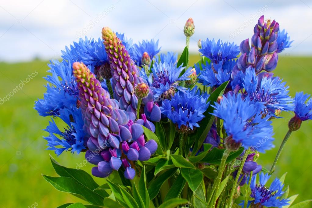 Cornflower and lupines bouquet