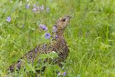 Fotografie Tiere Kamtschatka
