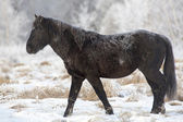 Fotografie Animals Kamchatka