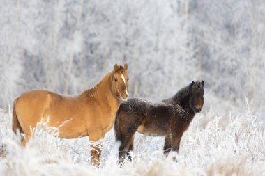 Animals Kamchatka